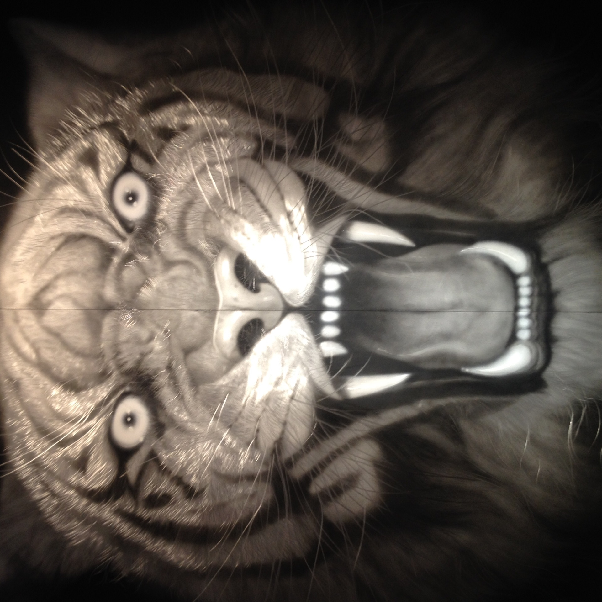 壁纸 动物 猫 猫咪 小猫 桌面 1920_1920